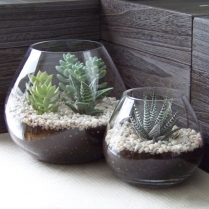succulent-terrarium-1_ad4f2ff0f6598d3481b8095a08641d6c