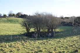 A fairy tree circle