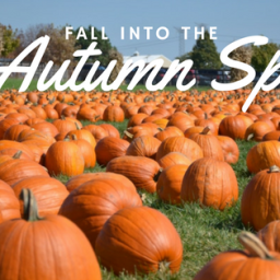 Fall into the local autumn spirit
